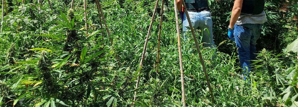 La Guardia Civil incauta en Benicarló cinco armas de fuego y desmantela una plantación de marihuana