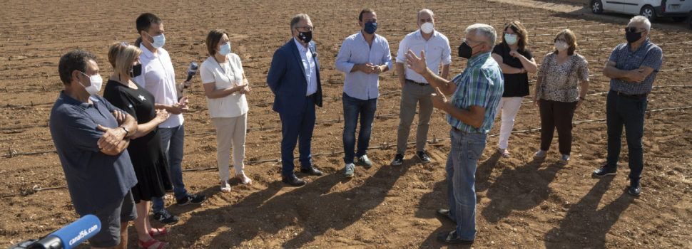 La Diputación aporta 57.000 euros para sustituir las plantaciones enfermas de la Denominación de Origen Protegida Alcachofa de Benicarló