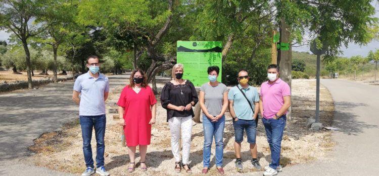 Diputació de Castelló impulsa rutes cicloturístiques entre oliveres mil·lenàries de Càlig, Sant Jordi i Traiguera amb suport de la Taula del Sénia