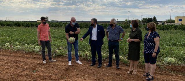 L'Ajuntament de Benicarló demanarà ajudes per als agricultors afectats per la pedregada