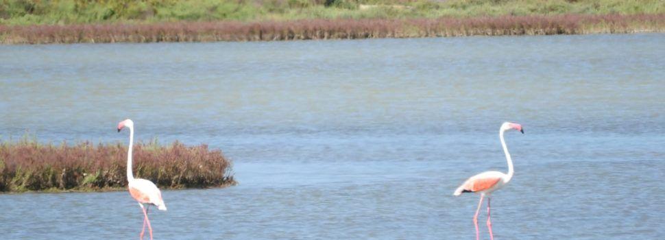 Turisme CV muestra la oferta de turismo ornitológico y ecoturismo de la Comunitat Valenciana en el Delta Birding Festival
