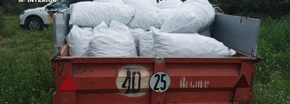 Cinco detenidos por hurtar más de una tonelada de algarrobas en Sant Jordi