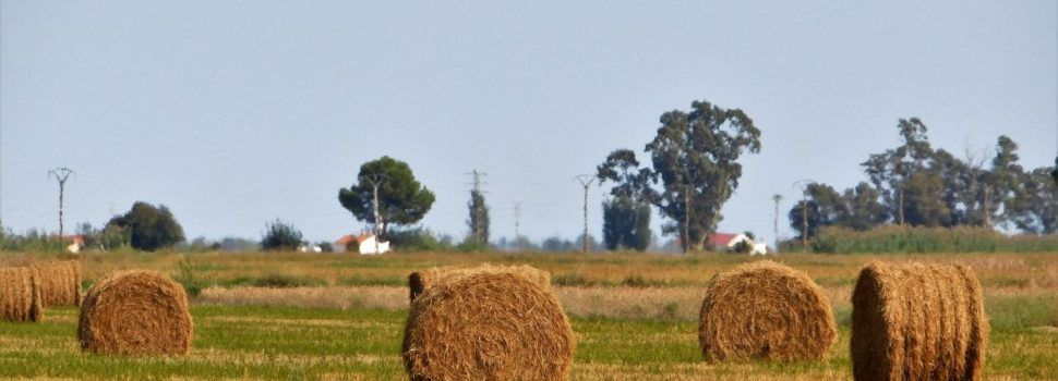 Fotos: més temps de sega al Delta de l'Ebre