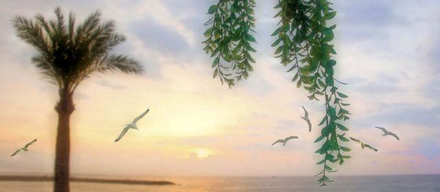 Ben Vist: L'alba a Vinaròs