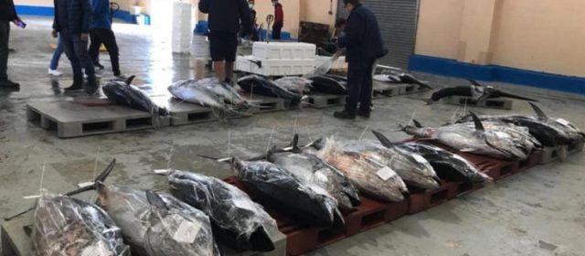 Els pescadors valencians esgoten la quota olímpica de la tonyina roja en tan sols 12 dies
